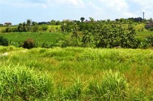 tanah murah di Canggu Bali