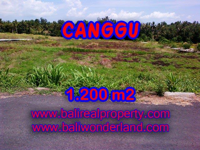 Jual tanah di Canggu 12 Are View sawah di Tumbak Bayuh