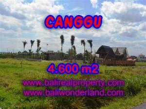 Jual tanah di Canggu 46 Are di Canggu pererenan Bali