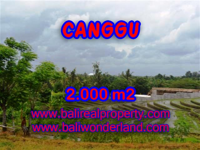 TANAH DIJUAL DI CANGGU MURAH RP 4.750.000 / M2 - TJCG133