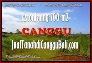 TANAH MURAH JUAL CANGGU 700 m2 View Sawah, lingkungan villa