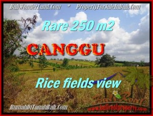 TANAH MURAH di CANGGU BALI DIJUAL 2,5 Are View sawah lingkungan villa