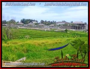 TANAH DIJUAL MURAH di CANGGU BALI 1.450 m2 di Canggu Cemagi