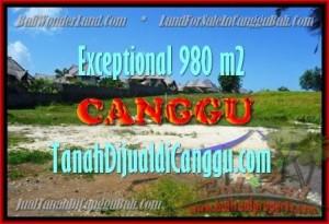 JUAL TANAH di CANGGU 980 m2 View Sawah, Sungai dan laut