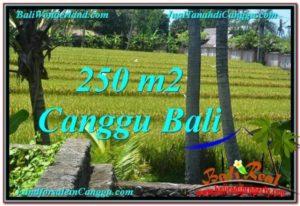 TANAH di CANGGU BALI DIJUAL Untuk INVESTASI TJCG207