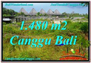 TANAH MURAH di CANGGU 1,480 m2 View sawah lingkungan villa