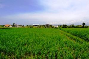 Tanah dijual di Canggu Bali view sawah dekat dengan Pantai Brawa Canggu - TJCG004E