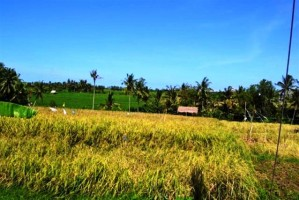 tanah dijual di Canggu Bali view sawah dan sungai pinggir jalan raya Canggu - TJCG035E