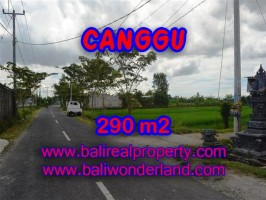 TANAH MURAH DIJUAL DI CANGGU BALI TJCG141 - PELUANG INVESTASI PROPERTY DI BALI