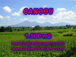 DIJUAL MURAH TANAH DI CANGGU TJCG144 - INVESTASI PROPERTY DI BALI