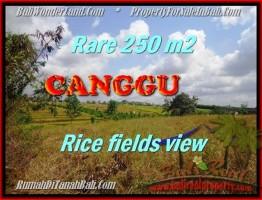 TANAH di CANGGU JUAL MURAH 2,5 Are View sawah lingkungan villa