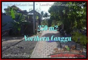 TANAH MURAH di CANGGU DIJUAL 2.5 Are di Canggu Pererenan