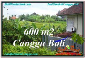 DIJUAL TANAH MURAH di CANGGU 600 m2 di Canggu Brawa