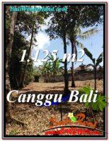 TANAH DIJUAL di CANGGU 1,125 m2  View Sawah dan tebing sungai