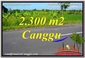 TANAH di CANGGU BALI DIJUAL 23 Are di Canggu echo beach