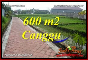 JUAL TANAH MURAH di CANGGU BALI 6 Are View sawah, lingkungan villa